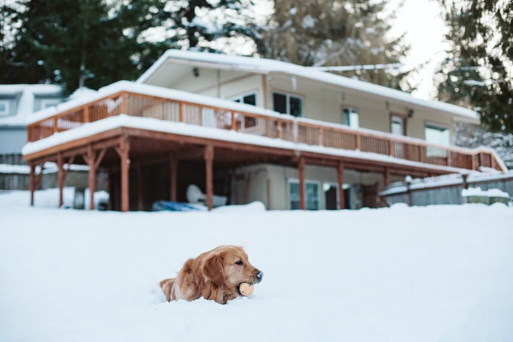 golden retriever sits in snow with ball in front of a house covered in snow